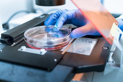 biofilm culture under microscope