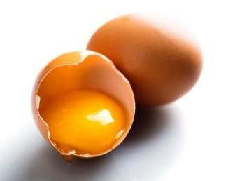 chicken egg use in wound healing