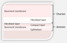 Amniotic membrane