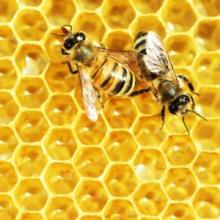 honey treatment and wounds